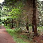 West Wood, Lyminge Forest by FelicityB
