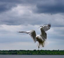 Air Brakes by Heather King