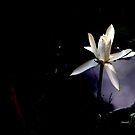 A light in the darkeness by MaluMoraza