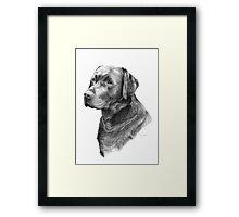 Black Labrador Framed Print