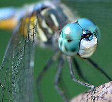 A Dragonfly Friend by Paula Betz