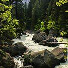 Rushing River by Barbara  Brown