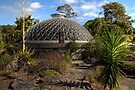 Mt Coot-tha Botanic Gardens  Brisbane  Australia  by William Bullimore