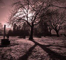 Gorsedd Tree,Ystradgynlais,Powys by tonybatey69