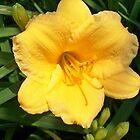 "Yellow One by Scott ""Bubba"" Brookshire"