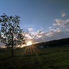 Summer tree-II by Frank Olsen