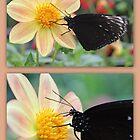 Dark Beauty collage by missmoneypenny