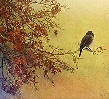snow oak / dark eyed junco by R Christopher  Vest