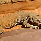 Lizard by Sanne Hoekstra