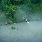 Big Bird in the Rain by olehippy13