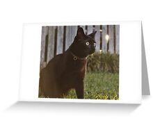 Omar at Dusk Greeting Card