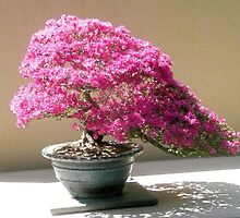 Azalea Bonsai by Paul  Richardson