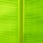 banana leaf by karthik r