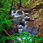 Turitable Creek by Stephen Ruane