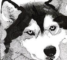 Husky by Kyle Bustamante