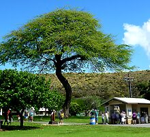 Mosquite Tree in Diamond Head Crater Honolulu by Keith Richardson