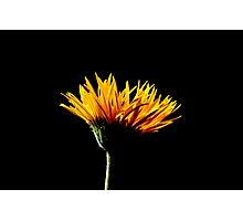 Floral 17 Photographic Print