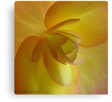 Begonia heaven Canvas Print