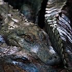 """Scaly Snuggles"" Alligators at Cheyenne Mountain Zoo by Zeibyasis"