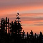 Shasta Sunset by Amy Hallowes
