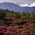 Mountain Rhododendrons by Jane Best
