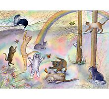 Kitties wait for their humans at Rainbow Bridge Photographic Print