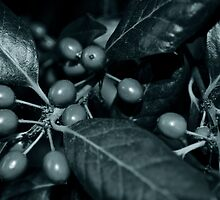 Faded Berries by Sarah Reeve