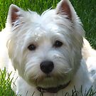 Wonderful Westie Year 2012 by MarianBendeth