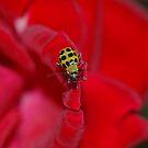 Beetle Buggie by Wviolet28