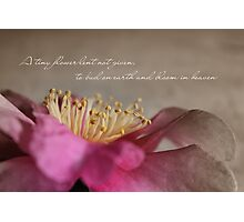 A Tiny Flower Photographic Print