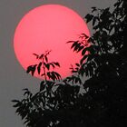 Red Sun Setting by tscp