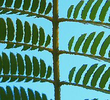 """""""Pickle Tree or Fern Frond?"""" by the57man"""