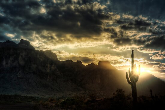 Saguaro Sunrise  by Saija  Lehtonen