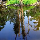 Reflection in City Park Lagoon by Wanda Raines