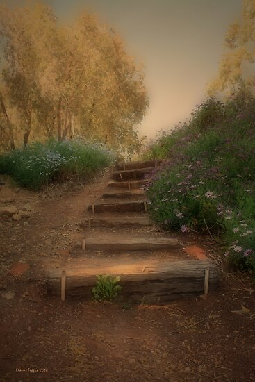 Dream Steps by Elaine Teague