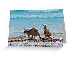 Beach Roos - Lucky Bay - Cape Le Grande - WA Greeting Card