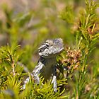 Perched Reptile by JVGMcGhie