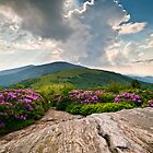 Roan Mountain Rays - Jane Bald Landscape by Dave Allen