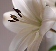 Beautiful Lily by vbk70