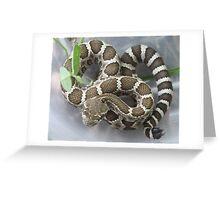 Baby Rattlesnake Greeting Card