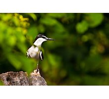 A Wary Tern Photographic Print