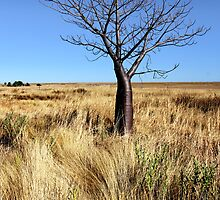 Boab and Spinifex by Mark Ingram Photography