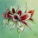 Amaryllis Flower by Helen Lush