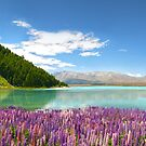 Tekapo Summer by Steven  Sandner