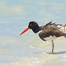 The Oyster Catcher by Kathy Cline