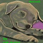 Puppy, Dog,Canine e-book by Dawn B Davies-McIninch