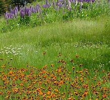 Wildflowers By The Roadside by Tracy Faught