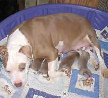 Rose And Her New Babies by Ginny York
