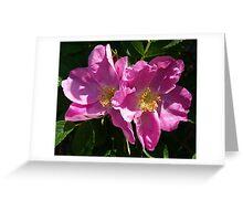 Pink Beach Rose's Greeting Card
