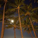 Moon Palms by fnqphotography